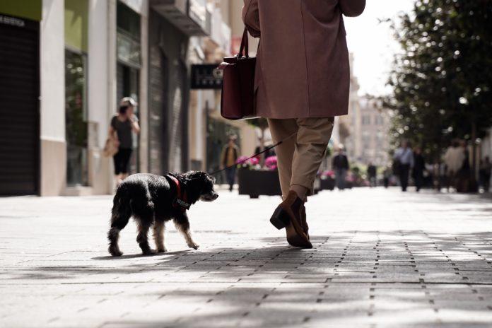 Un ciudadano pasea a su perro por la calle Gondomar de Córdoba. Foto: Miguel Valverde