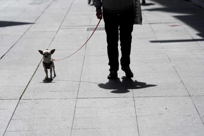 Paseando al perro. Foto: Rafa Alcaide