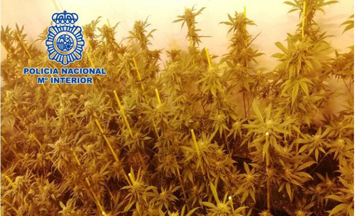 Plantaciones de marihuana