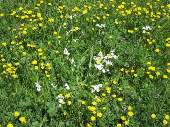 Flores en un prado