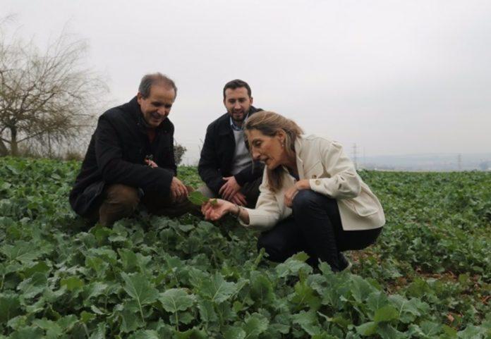 Agricultura,. El investigador Antonio Sánchez junto a los catedráticos de la Unidad de Edafología Vidal Barrón y María del Carmen del Campillo