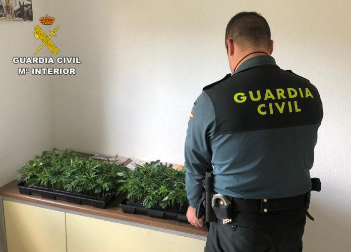 Plantas Marihuana Santaella