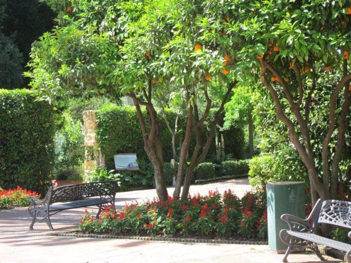 Flores, arbustos y árboles del Real Jardín Botánico