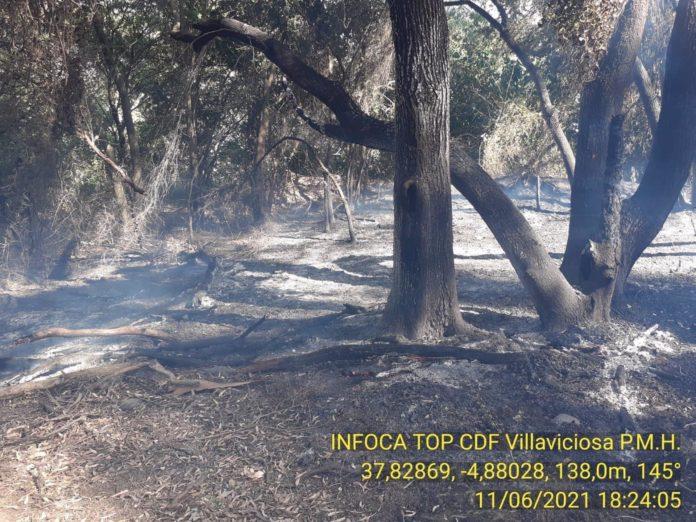 Incendio forestal entre las fincas La Veguilla y La Reina