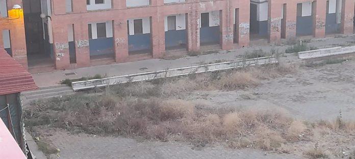 Pastizales existentes en el Patio Gabriel Celaya de Las Moreras