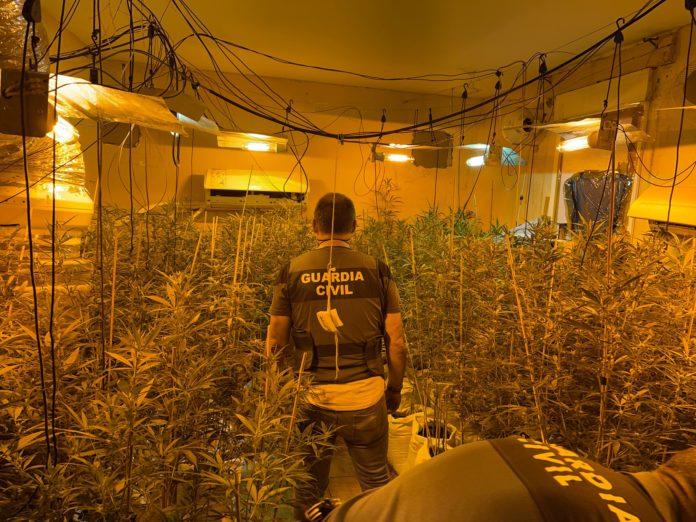 Plantación Marihuana, Almodóvar del Río